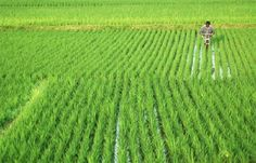 India's monsoon brings cheer, concern for farmers | Reuters