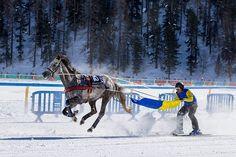 CHEVAUX COURSES HIPPIQUES PARI PMU ARGENT FACILE GAGNER ARGENT PRONOSTICS Courses Hippiques, Location Chalet, Ski, Horses, Voici, Animals, Passion, Sports, Hs Sports