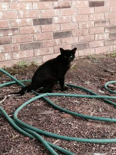 (Mayflower)  Saw this cat around my house a time or two before the tornado. Now he's here all the time. Seeing as how all the houses are gone except mine I'm sure he lost his house too. Does he belong to you? Contact Jennifer Ford Massey