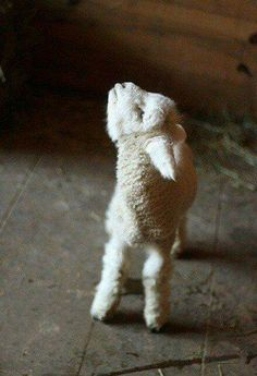 """This little lamb speaks for all animals that end up on humans plates. He is saying, """"Please don't eat me!"""" You have a choice to not eat cute animals. Go Vegan - every meal you eat without meat being on your plate, you are saving lives. Love All Animals Cute Baby Animals, Farm Animals, Animals And Pets, Funny Animals, Nature Animals, Cute Creatures, Beautiful Creatures, Animals Beautiful, Beautiful Cats"""