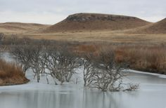 Dead trees in ice can be seen in the new Horse Thief Reservoir in Hodgeman County, Kansas.
