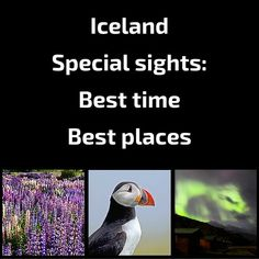 Free detailed Guide to help you decide the BEST TIME to visit Iceland FOR YOU - based on weather, travel conditions and the possibility to see puffins, ice caves, whales, northern lights, lupin flowers (and the best places to see them)