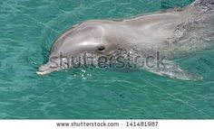 A Portrait Of Beautiful Dolphins In Mexico. Banque d'images : 141481987 : Shutterstock
