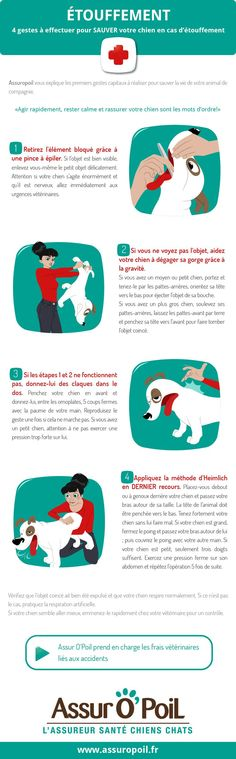 Assur O' Poil La Mutuelle Chien vous informe sur les 4 gestes à effectuer pour sauver votre chien en cas d'étouffement. Il ne faut surtout pas paniquer et agir rapidement. Dog Lady, Diy Stuffed Animals, Animals And Pets, Cute Animals, Russell Terrier, Pet Life, Baby Puppies, I Love Dogs, Mignon