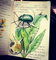 The beautiful Nature Journal of illustrator Jo Brown Arte Sketchbook, Brown Art, Nature Journal, Study Journal, Nature Study, Art Graphique, Natural World, Natural History, Art Journals