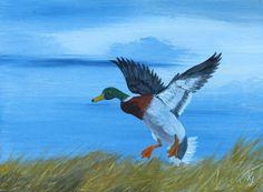 Mallard paintings duck paintings mallard in by KentJacobsonArtist