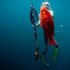 Image result for spearfishing