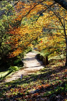 the driveway in Autumn
