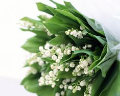 lily of the valley - Google Search