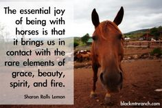 """The essential joy of being with horses is that it brings us in contact with the rare elements of grace, beauty, spirit and fire."" Shannon Ralls Lemon"