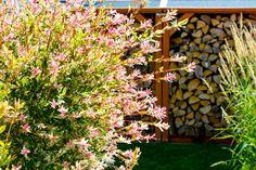 Krásná vrba japonská Hakuro Nishiki se vyznačuje úžasnou hrou barev