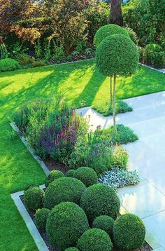 23 Ideas for modern landscape ideas topiaries Boxwood Landscaping, Boxwood Garden, Small Yard Landscaping, Garden Paving, Modern Landscaping, Trees For Front Yard, Front Garden Landscape, Garden Deco, Backyard Garden Design