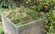 Haben Sie auch das Problem, dass der Rasenschnitt sich auf Ihrem Komposthaufen nicht richtig zersetzt? Hier lesen Sie, was zu tun ist, damit er optimal kompostiert wird.