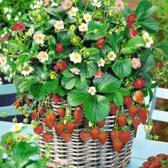 Чем подкормить цветущую …
