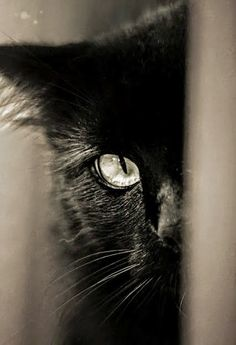 17 Black Cat Voids That Are Not-So-Secretly Watching And Judging You - World's largest collection of cat memes and other animals Beautiful Cats, Animals Beautiful, Cute Animals, Pretty Cats, Crazy Cat Lady, Crazy Cats, I Love Cats, Cool Cats, Gato Grande