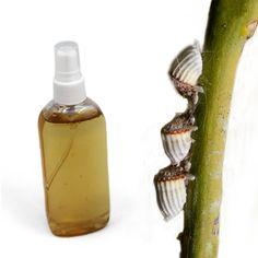 insecticida natural muy ecológico para combatir las plagas de pulgón y cochinilla de vuestras plantas.