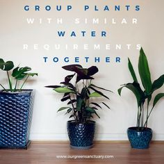 Almost everyday I get asked the same question, how often should I water my indoor plants? The finger test will help you determine when to water your plants. Water Me, Green Plants, Indoor Plants, Gardening, Group, Medium, Blog, Diy, Home Decor