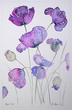 PURPLE POPPIES original watercolour painting by artist Amanda Hawkins 14 x 22cm floral artwork flowers cottage garden contemporary art