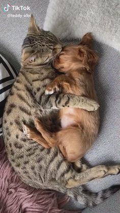funny dogs and cats – Gomondal - Baby Animals Cute Little Animals, Cute Funny Animals, Funny Dogs, Cute Dogs, Cute Puppies, Cute Cats And Kittens, Baby Cats, Adorable Kittens, Ragdoll Kittens