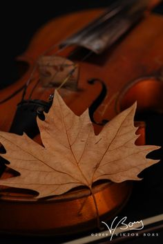 The music of Autumn by *gummaid