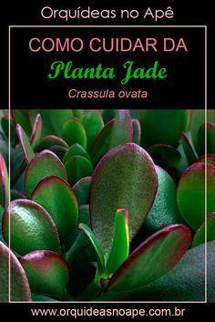 Cactus Names, Succulent Names, Succulent Gardening, Gardening Tips, Crassula Ovata, Paddle Plant, Plantas Bonsai, Jade Plants, Cactus Y Suculentas
