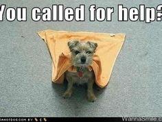 doggie rescue