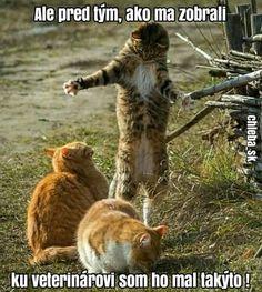 Ale předtím, než mě vzali k veterináři, jsem ho měl takového! Big Cats, Humor, Ale, Jokes, Entertaining, Carpe Diem, Funny, Animals, Animais