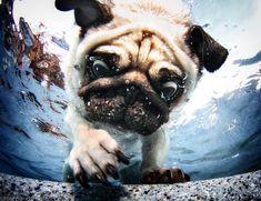 Amazing Underwater Dog Photography by Seth Casteel Dog 2