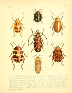 v. 2 - Aid to the identification of insects / - Biodiversity Heritage Library