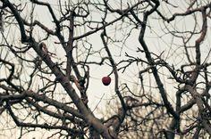 * Fruit