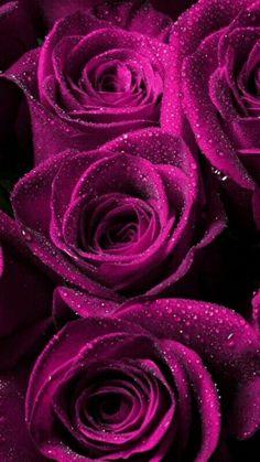 Purple Roses Wallpaper, Flower Background Wallpaper, Rose Background, Flower Phone Wallpaper, Flower Backgrounds, Beautiful Rose Flowers, Beautiful Flowers Wallpapers, Red Rose Pictures, Flower Aesthetic