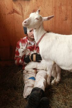 big picture farm: inspiring young couple with dairy farm making award winning goat-milk caramels and keeping adorable blog