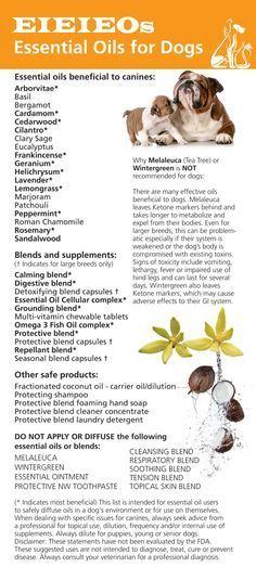 essential oils safe to diffuse in a dog s environment please read disclaimer
