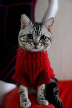 Christmas Kitty. Would love to see video of dressing him in this turtleneck sweater!~~~Oh to cute,lol