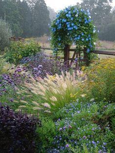 Morning Glory Garden