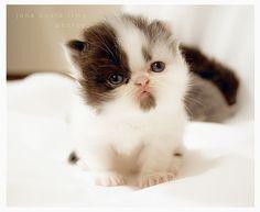 kittens !