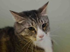 TO BE KILLED 04/11/15 – BURBERRY – A1032596  MANHATTAN, NY PLEASE SHARE, PLEDGE, FOSTER, ADOPT! HE NEEDS YOU!