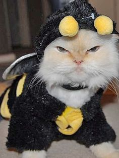 Halloween Inspiration Cats In Costume! & 54 best Cats in Costumes images on Pinterest   Kittens Baby kittens ...