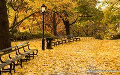 http://www.jensilverman.com/blog/2012/10/autumn-central-park/