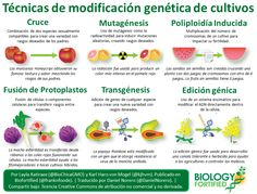 Resultado de imagen para cultivos infografia
