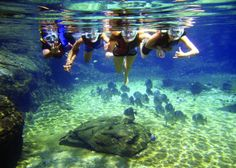 Heading down to Durban for the school holidays? Make sure to swing by uShaka Marine World to entertain the whole family! Kwazulu Natal, Snorkelling, Cheap Travel, Africa Travel, South Africa, Tourism, African, Adventure, Vacation