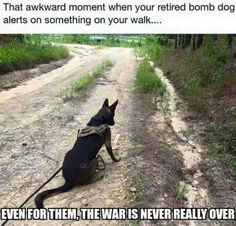 Military dogs can suffer from PTSD. Let's help both canine soldiers and human soldiers. Military Working Dogs, Military Dogs, Military Humor, Military Service, Police Dogs, Military Personnel, Military Life, Animals And Pets, Funny Animals