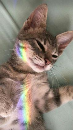 10 loving, amazing cats for National Cat Day - Katzen Bilder - Hunde Cute Kittens, Cats And Kittens, Kitty Cats, I Love Cats, Crazy Cats, Beautiful Cats, Animals Beautiful, Cute Baby Animals, Funny Animals