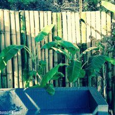 Cerco de Bambu Gigante cañas de 8-14 cm de grosor. Cerra tu casa con cañas y hablá con tu vecino solo cuando querés! ... Garantizado!!