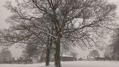 Chapel Allerton park in the snow