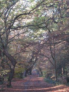 Wimbledon Common, Wimbledon, London. A wonderfully beautiful place to go walking.
