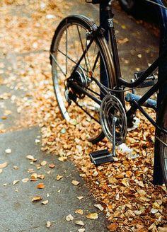 bike ride through the leaves