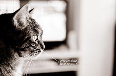 Série Boules de Poil en noir & blanc #cat #pet #chat