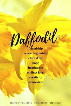 daffodil symbolic meaning