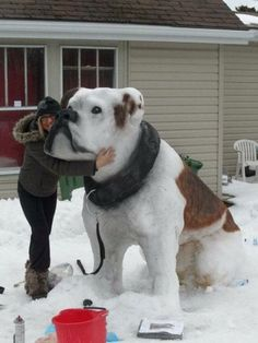 First snow puppy of the year! Georgia Bulldogs, Pitbull, Funny Images, Funny Photos, American Bulldog, Awsome Pictures, Baby Jars, Snow Sculptures, Snow Art